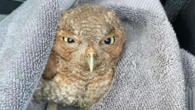 Florida deputy saves owl that was being attacked | WBFF